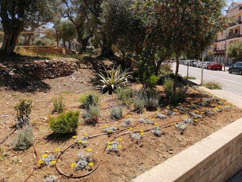 Plantaciones y reposiciones en espacios verdes