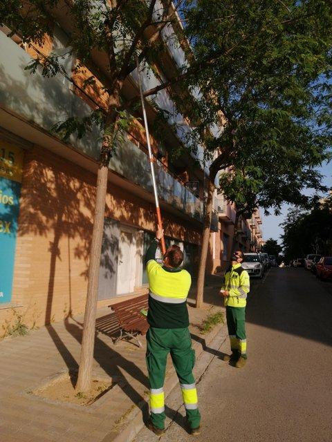 Alliberament d'organismes de control biològic en arbrat municipal