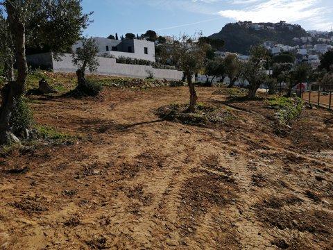 Adequació espai verd olivar Gran Via Pau Casals