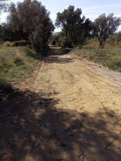 Arranjament de camins forestals municipals