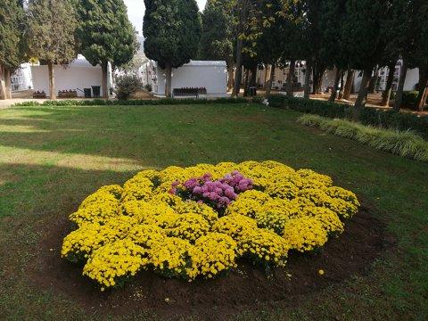 Plantació flor de temporada tardor-hivern