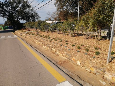 Millores i reposicions de plantes en espais verds