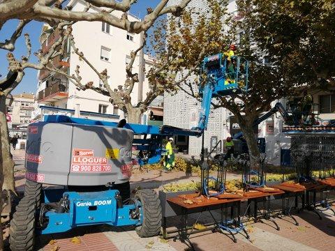 Roses inicia els treballs de poda d'arbrat urbà